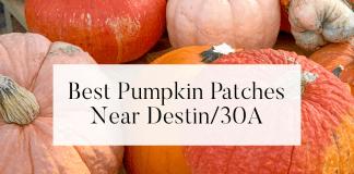destin 30a pumpkin patches